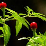 Wybieramy środki ochrony roślin