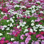 Jakie rośliny warto posadzić w ogrodzie?