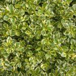 Stwórz bazę z roślin wieloletnich